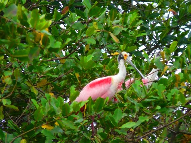 Biodiversity in Costa Rica: Birds!! | Enchanting Costa Rica