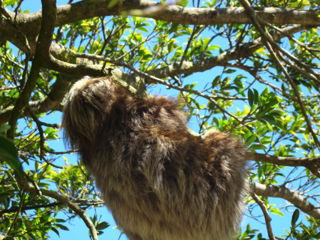 The Sloths in Monteverde Costa Rica