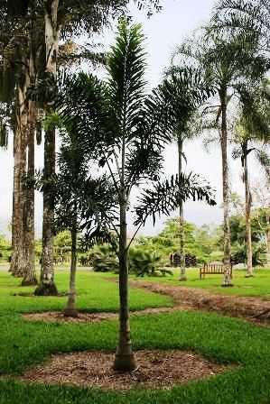 The Botanical Gardens Of Turrialba Costa Rica Tripatini