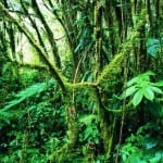Monteverde's incredible cloud forest