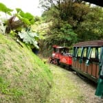 Explore the cloud forest by train