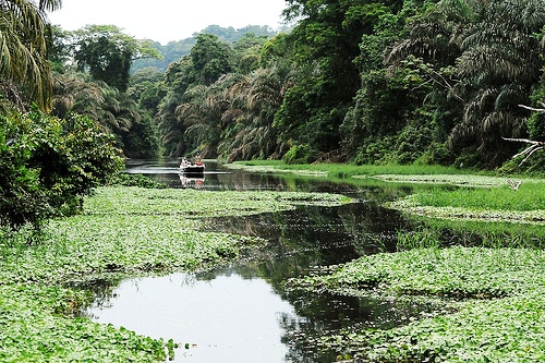 Nature-Photo-Opportunity-Tortuguero