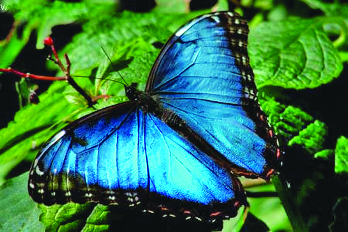 Costa Rica is top ecotourism destination in the world