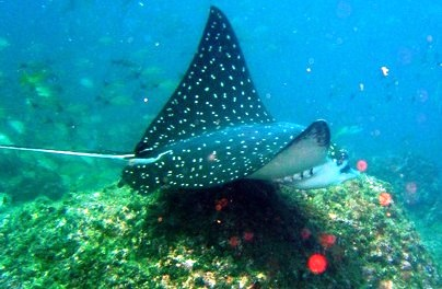 See beautiful sea life snorkeling off Costa Rica's Nicoya Peninsula