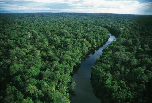 Tropical forests like the Amazon are critical factors to climate change