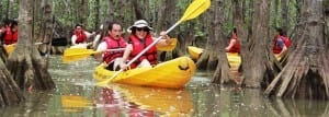 Explore the world of a mangrove estuary on this Manuel Antonio kayaking tour