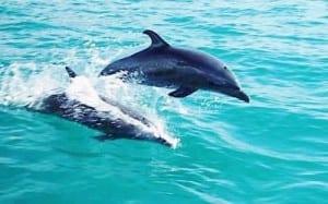 Ocean activities Costa Rica