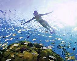 Oceans Unlimited offers fun snorkeling tours along Manuel Antonio's coast