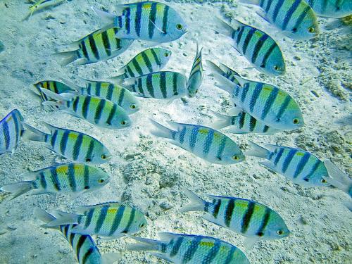 Snorkeling Manuel Antonio, Costa Rica
