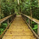 Explore wild nature at Veragua Rainforest in Costa Rica