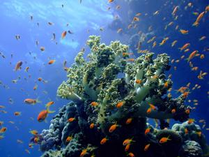 Corals & colorful tropical fish in Cahuita National Park, Costa Rica