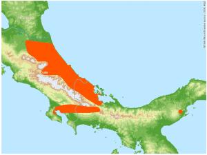 Bolitoglossa colonnea habitat map, photo courtesy of Smithsonian Tropical Research Institute