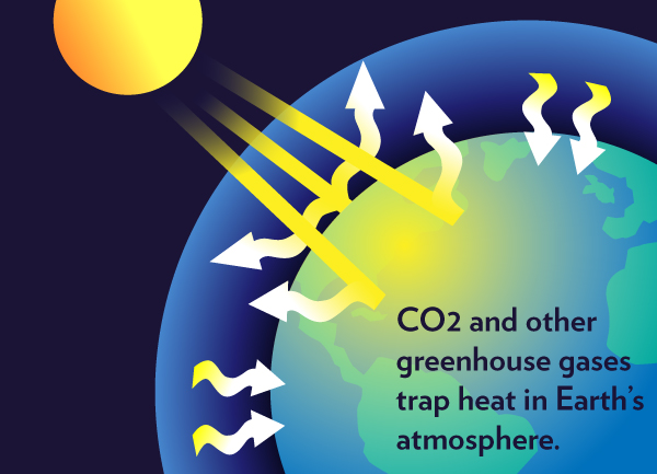 What Is the Greenhouse Effect and How It Happens