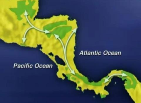 Mesoamerican Biological Corridor migration path