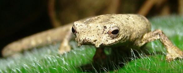 The Unique Wildlife of Costa Rica - Tripatini