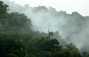 Cloud forest in San Gerardo de Dota
