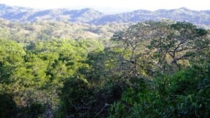 Dry tropical forest in Costa Rica