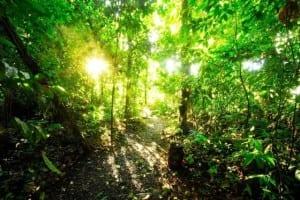 Nicuesa Lodge rainforest