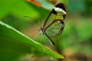 Butterfly Garden at Hotel Hacienda Guachipelin in Costa Rica