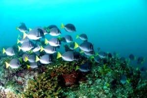 Coral reef in Golfo Dulce Costa Rica