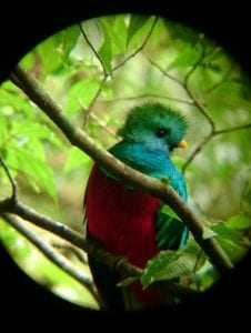 Quetzal at Monteverde, Costa Rica, photo courtesy of Rony Castro, naturalist guide at El Establo Mountain Hotel.
