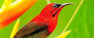 birds-at-veragua-rainforest-in-costa-rica
