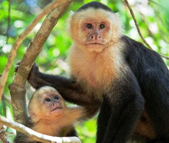 Costa Rica wildlife at Playa Nicuesa Rainforest Lodge