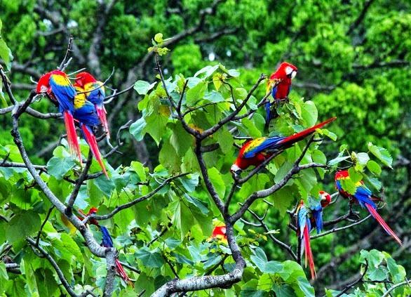 5-Beautiful-Blues-of-Costa-Rica