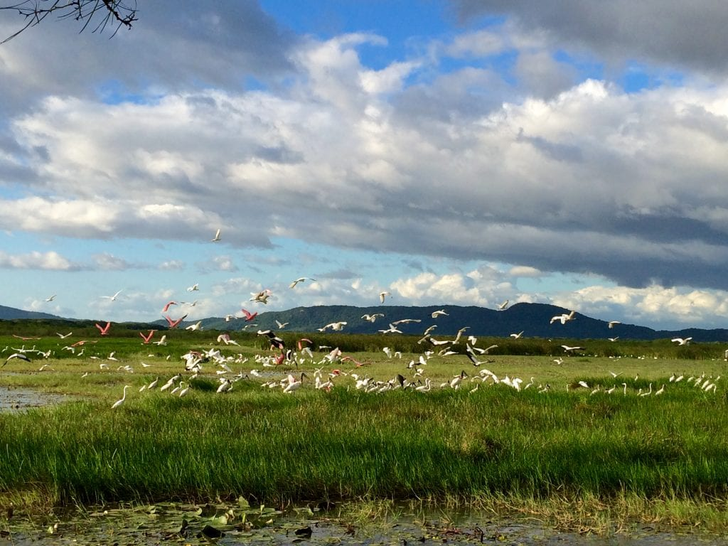 Variety of birds enjoying the wetlands, photo credit Rancho Humo.