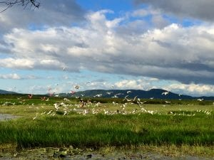 Variety of birds enjoying the wetlands, photo credit Rancho Humo.