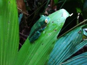 Veragua Rainforest in Costa Rica