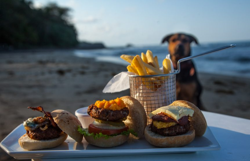Costa-Rican-pet-friendly-hotels-and-tourism