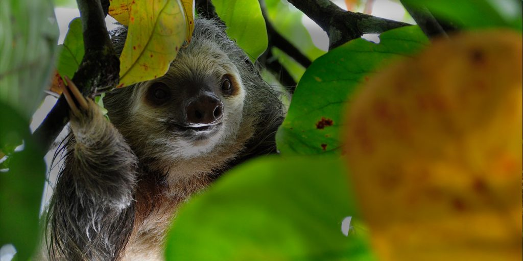 Tis the Season…to visit Costa Rica!